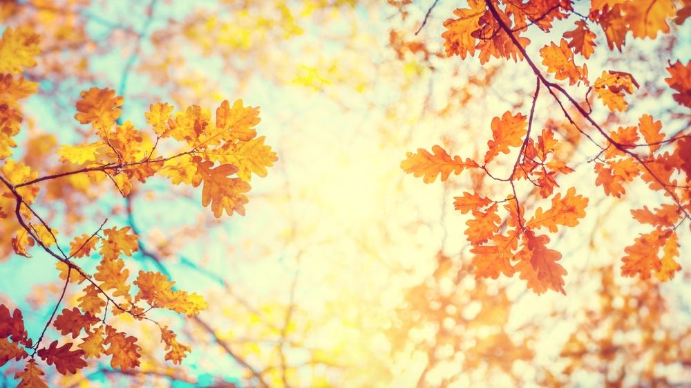 common autumn claims